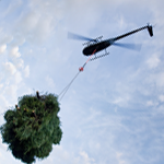 The Little Chopper that Could: The R44 Makes Fast Work Lifting Christmas Trees in Oregon